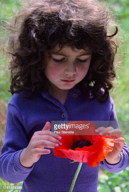 young girl inspecting giant red poppy