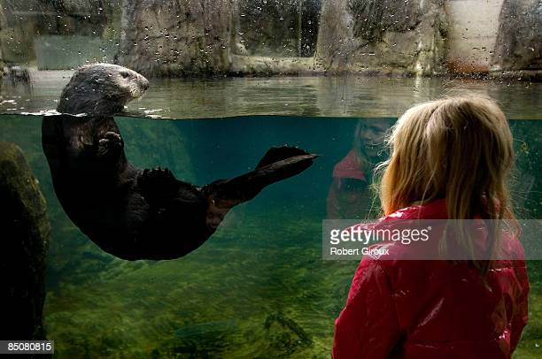 A young girl interacts with a sea otter at the Vancouver Aquarium February 17 2009 in Vancouver British Columbia Canada Vancouver is the host city...