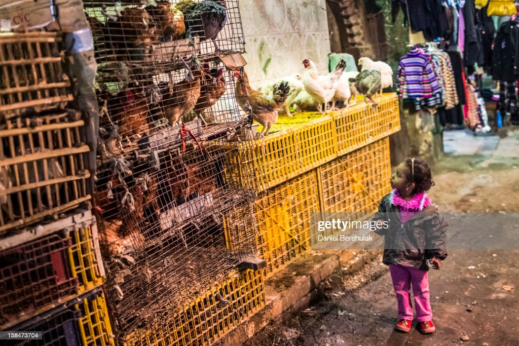 A young girl is captivated by chickens for sale in a market place on December 17, 2012 in Cairo, Egypt. Yesterday, major human rights and civil society organizations demanded a repeat of the first round of voting which was held on December 15, citing violations such as the lack of full judicial supervision of the vote, Freedom and Justice Party members congregating inside polling stations and Christians being barred from voting at some polling stations.