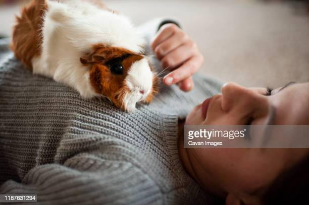young girl  laying on the floor petting her guinea pig at home - guinea pig stock pictures, royalty-free photos & images