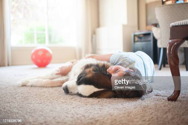 young girl laying with large saint bernard dog on the carpet at home - animal hair stock pictures, royalty-free photos & images