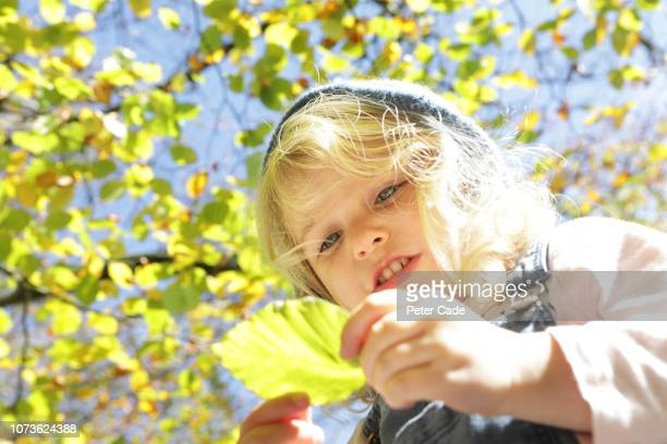 young girl looking at autumn leaf - chlorophyll stock pictures, royalty-free photos & images