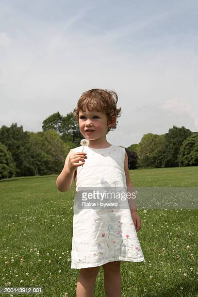 young girl (2-4) looking away - feuille de pissenlit photos et images de collection