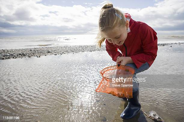 young girl looking into fishnet at beach - tidvattensbassäng bildbanksfoton och bilder