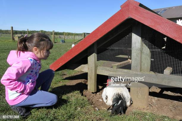 Young girl looks at a chicken in poultry farm