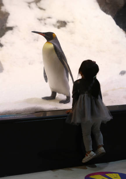 AUS: SEA LIFE Melbourne Aquarium Reopens To Public Under Victoria's Eased COVID-19 Restrictions