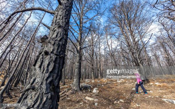 young girl looks harred trees after a fire in the forest. - italia stockfoto's en -beelden