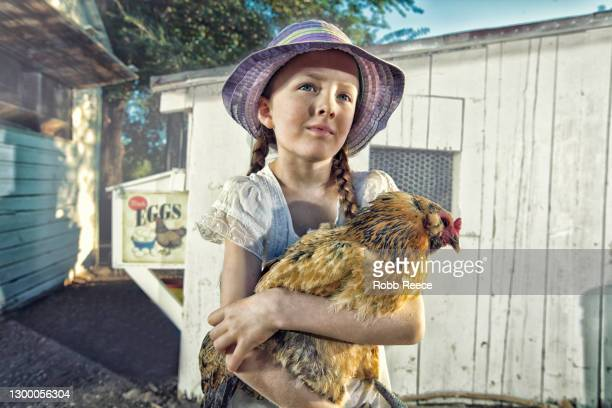 young girl on a farm with a chicken - robb reece stock pictures, royalty-free photos & images