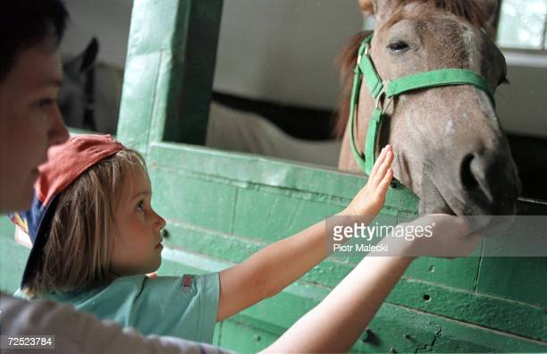 A young girl pets one of the horses that is presented at the annual world famous horse auction August 12 2000 in Janow Podlaski Poland The auction...