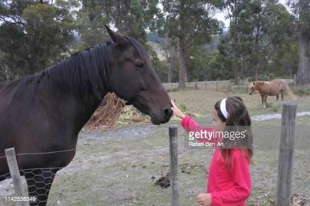 young girl petting a hourse in a ranch - rafael ben ari stock-fotos und bilder
