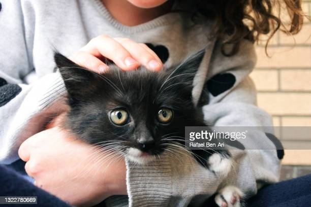 young girl petting a kitten - rafael ben ari stock pictures, royalty-free photos & images