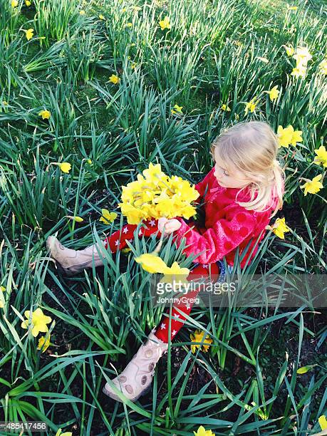Young girl picking daffodils