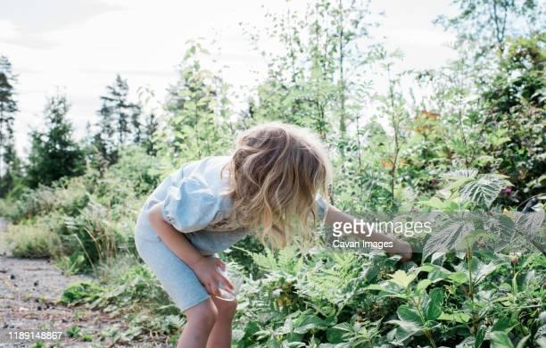 young girl picking fruit from wild bushes in the garden - niet gecultiveerd stockfoto's en -beelden