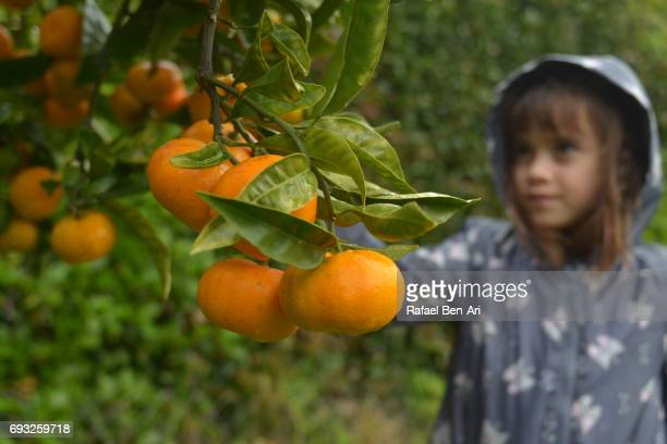 young girl picking fruit - rafael ben ari stockfoto's en -beelden