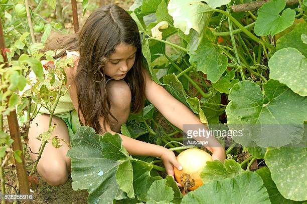 Young girl picking pumpkin in vegetable garden