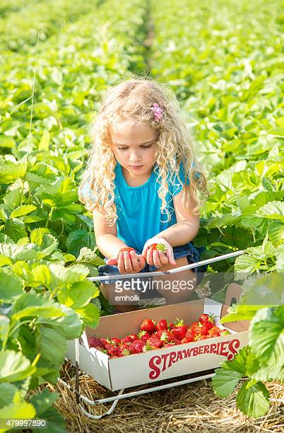 Young Girl Picking Strawberries in Summer