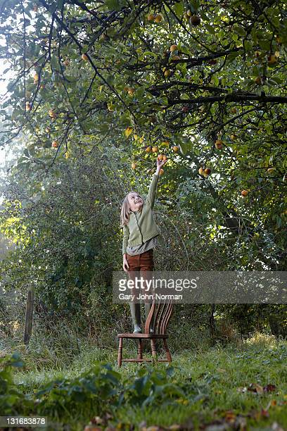 young girl picks apple from apple tree - apple fruit stock pictures, royalty-free photos & images