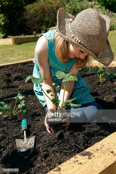young girl planting strawberries - strawberry stock pictures, royalty-free photos & images