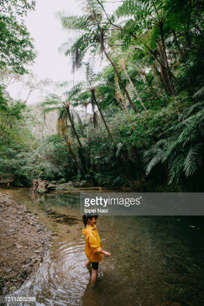 young girl playing in river in rainforest, okinawa, japan - reality fernsehen stock pictures, royalty-free photos & images