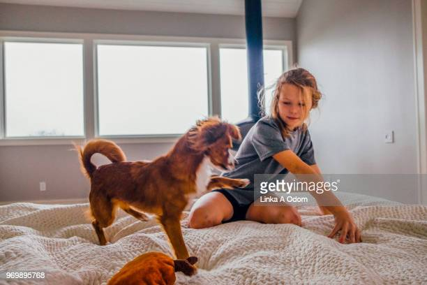 young girl playing on bed with domestic dog - domestic life imagens e fotografias de stock