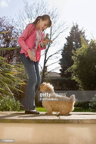 young girl playing with a dog outdoors - norfolk terrier photos et images de collection