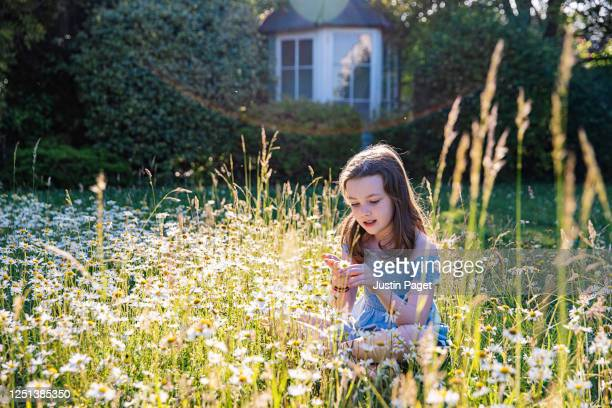 young girl playing with daisies in back garden - girls stock pictures, royalty-free photos & images