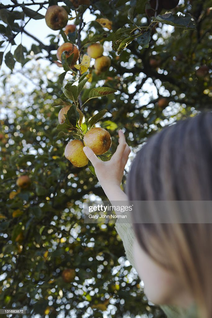 Young girl reaching for apple : Stock Photo