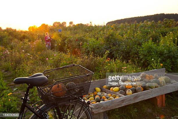 Young girl selecting gourds for fall