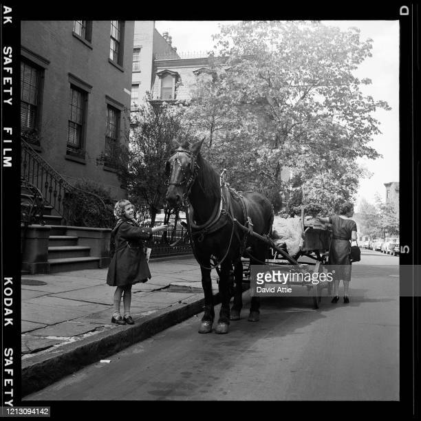 A young girl smiles at a horse that is delivering plants in in Brooklyn Heights in March 1958 in New York City New York