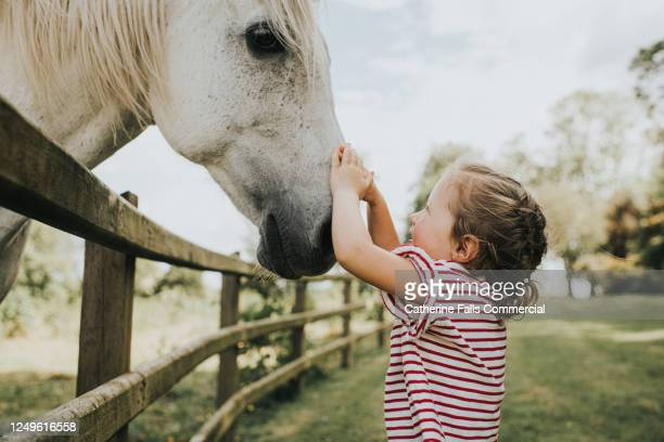 young girl stroking a gentle big white horse - equestrian event stock pictures, royalty-free photos & images