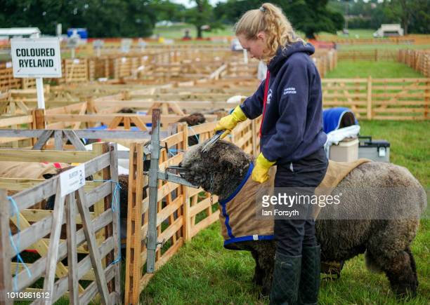 A young girl trims her sheep during 152nd the Ryedale Country Show on July 31 2018 in Kirbymoorside England Held in Welburn Park near Kirbymoorside...