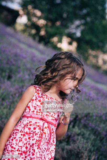 young girl visiting a lavender field - gabriela stock pictures, royalty-free photos & images