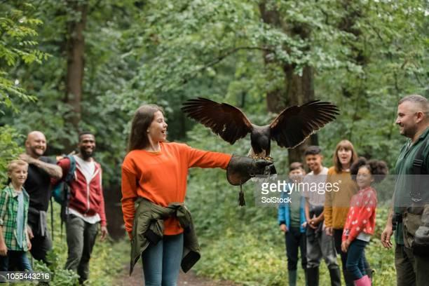 junge mädchen, die freiwilliges engagement für die demonstration - raubvogel stock-fotos und bilder
