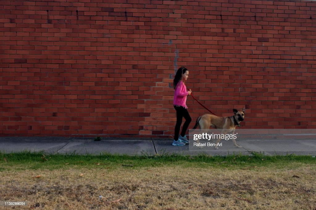 Young girl walking a dog in the street : Stock Photo