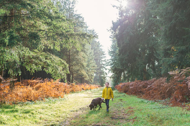 Young girl walking dog in forest