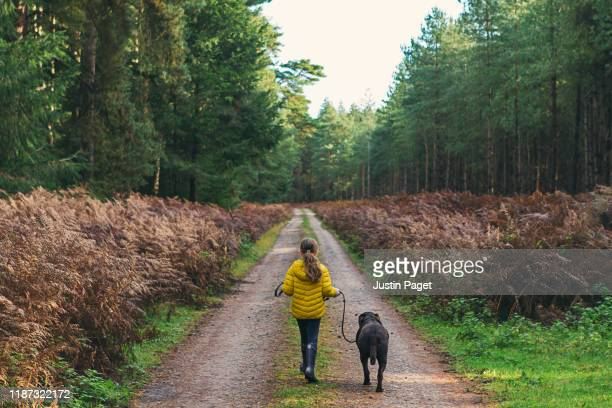 young girl walking dog in forest - leaving stock pictures, royalty-free photos & images