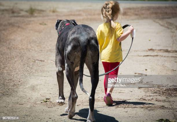Young girl walking large Great Dane dog on leash