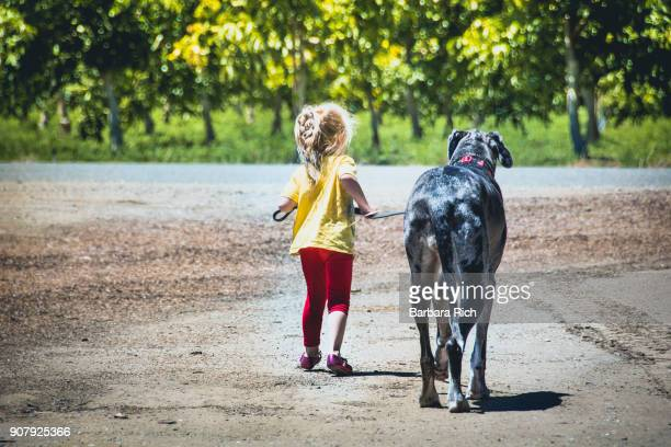 young girl walking large great dane dog on leash - following stock pictures, royalty-free photos & images