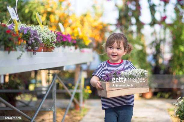 junges mädchen zu fuß mit box von frühling blühende pflanzen - frühling stock-fotos und bilder