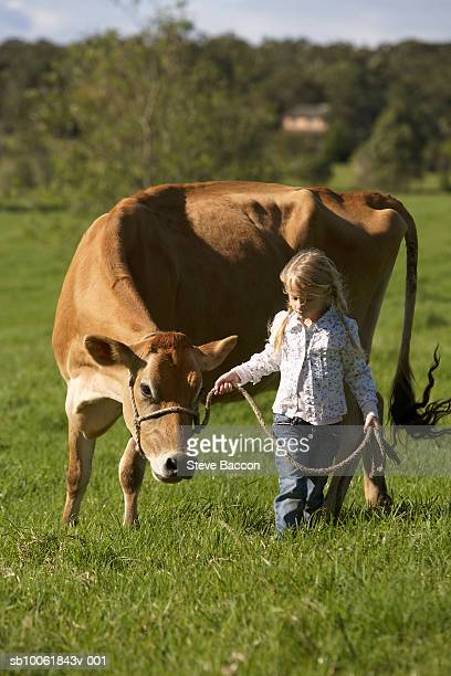 Young girl (6-7) walking with cow on meadow