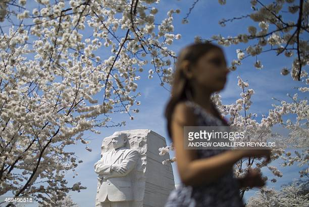 A young girl walks past the Martin Luther King Jr memorial near blossoming cherry trees in Washington DC on April 12 2015 According to the National...
