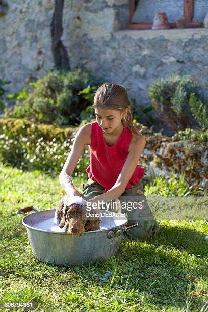 Young girl washing her dog