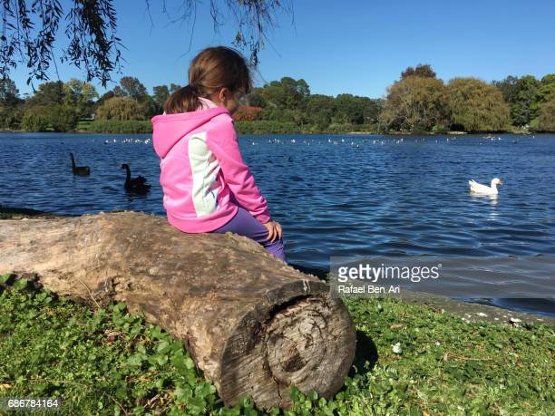 young girl watch water birds in a pond - rafael ben ari stock pictures, royalty-free photos & images