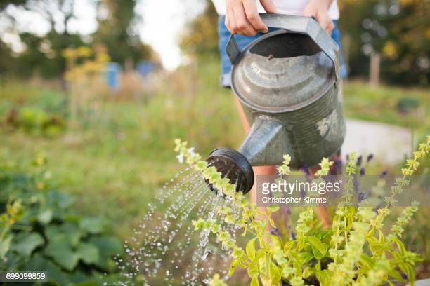 A Young Girl Waters Her Garden In Fort Langley