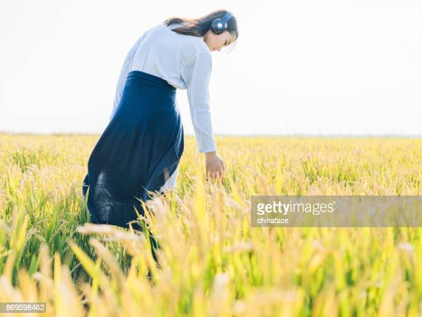 young girl wearing headphones in field,touching yellow wheats