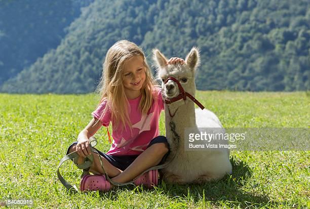 young girl wit a young alpaca - alpaga photos et images de collection