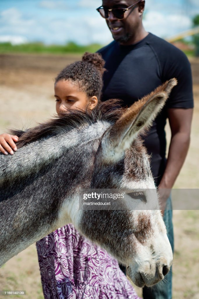 Young girl with autism connecting with donkeys in a special center. : Stock Photo