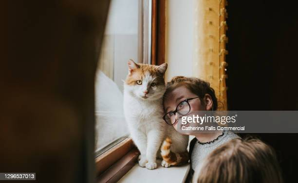 young girl with glasses looks up lovingly towards her cat, and leans her head against him. - affectionate stock pictures, royalty-free photos & images
