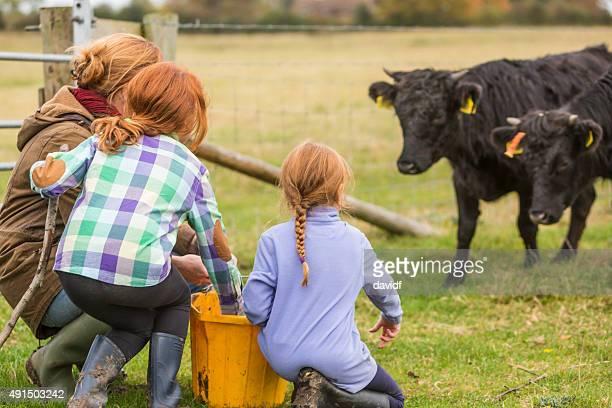 Junge Mädchen und Mutter Fütterung Kühe auf einem Bio-Bauernhof