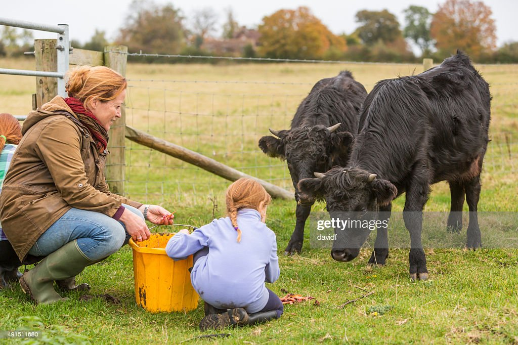 Young Girls and Mother Feeding Cows on an Organic Farm : Stock Photo